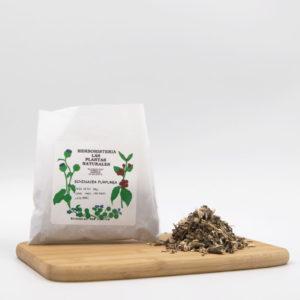 bolsa y hojas de equinacea